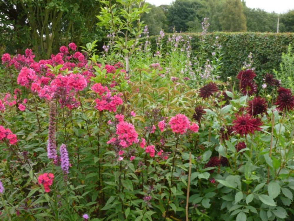 Wednesday 16<sup>th</sup> August, 5.30 PM<div style='margin: 5px 0px;'><span>Evening Visit to the Gardens at Laskey Farm - Introductory talk and guided tour<span></div>